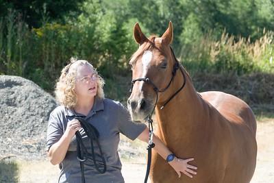 Horses 031