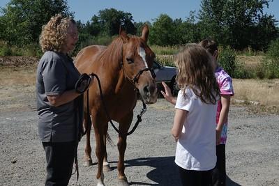 Horses 054