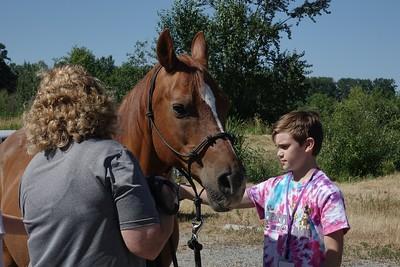 Horses 067