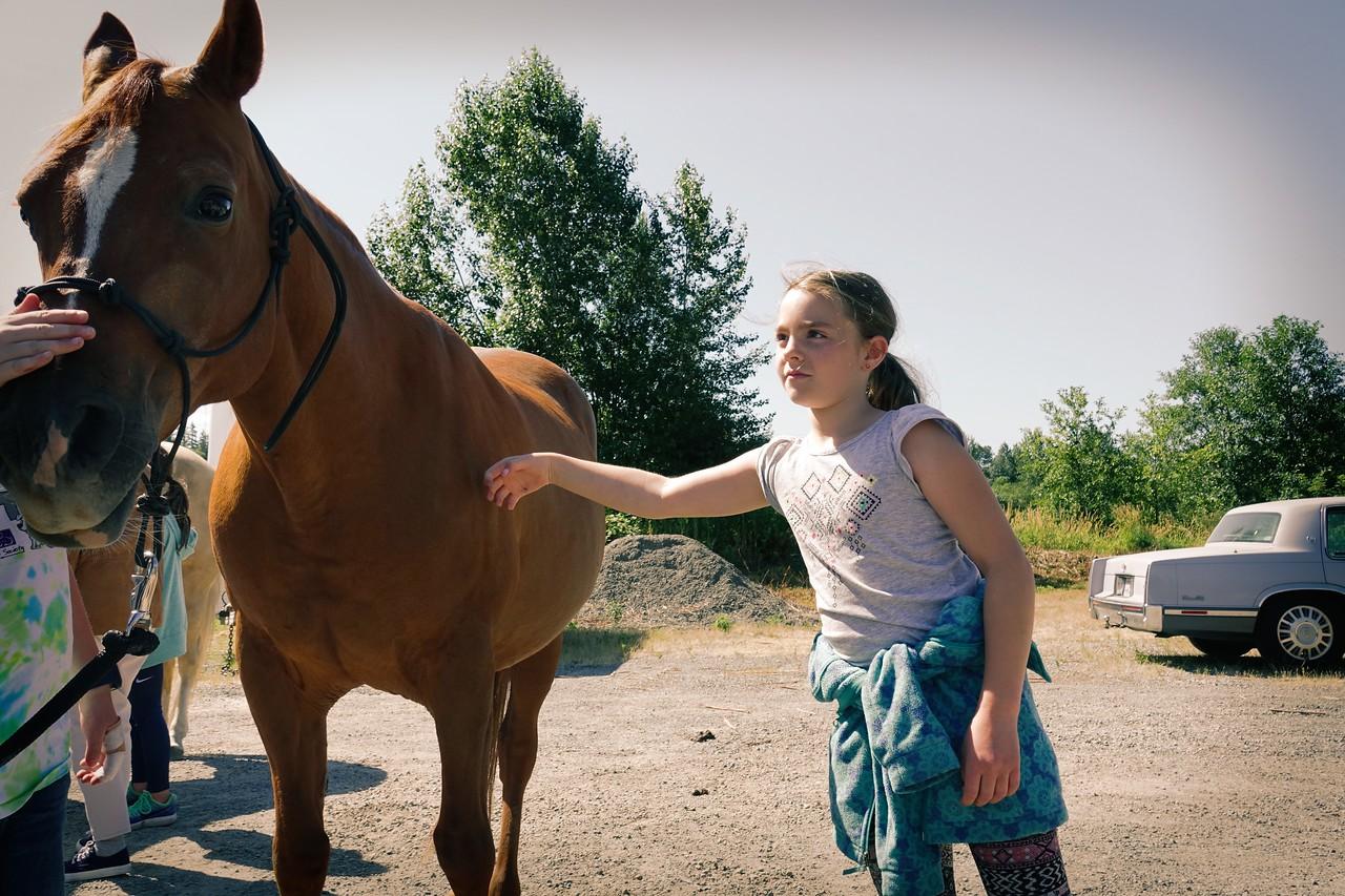 Horses 101 (1)