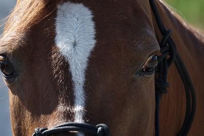 Horses 051