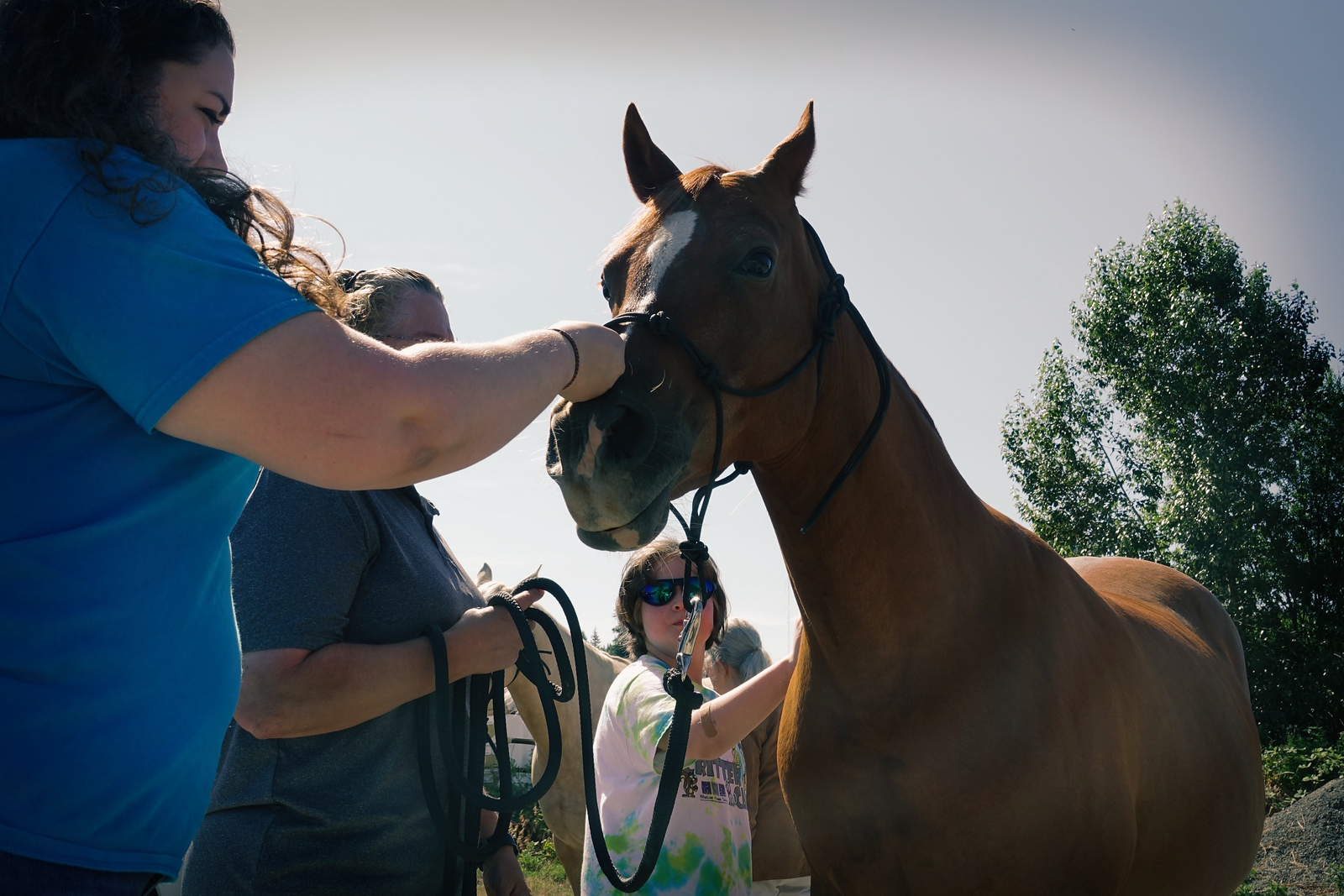 Horses 098
