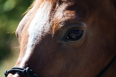 Horses 042