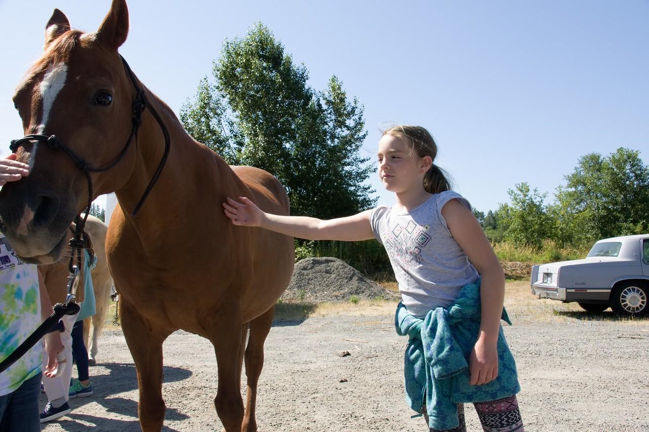 Horses 102