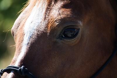 Horses 043