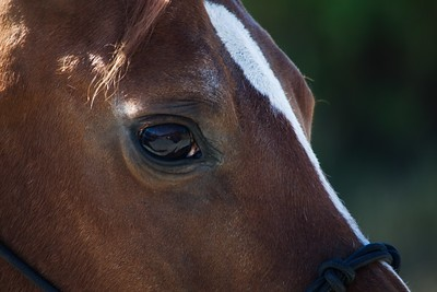 Horses 046