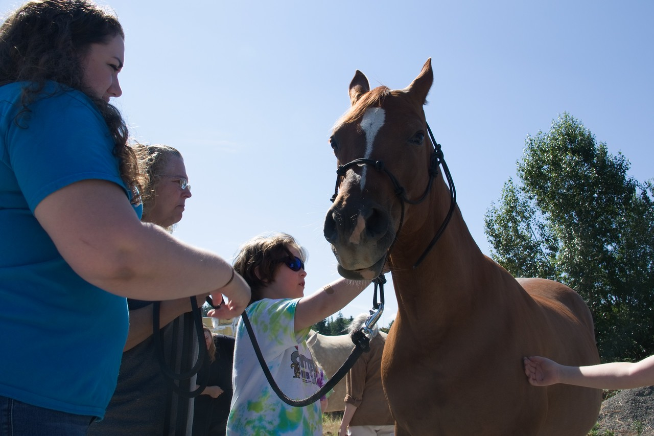 Horses 099