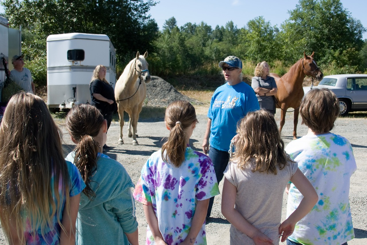 Horses 029