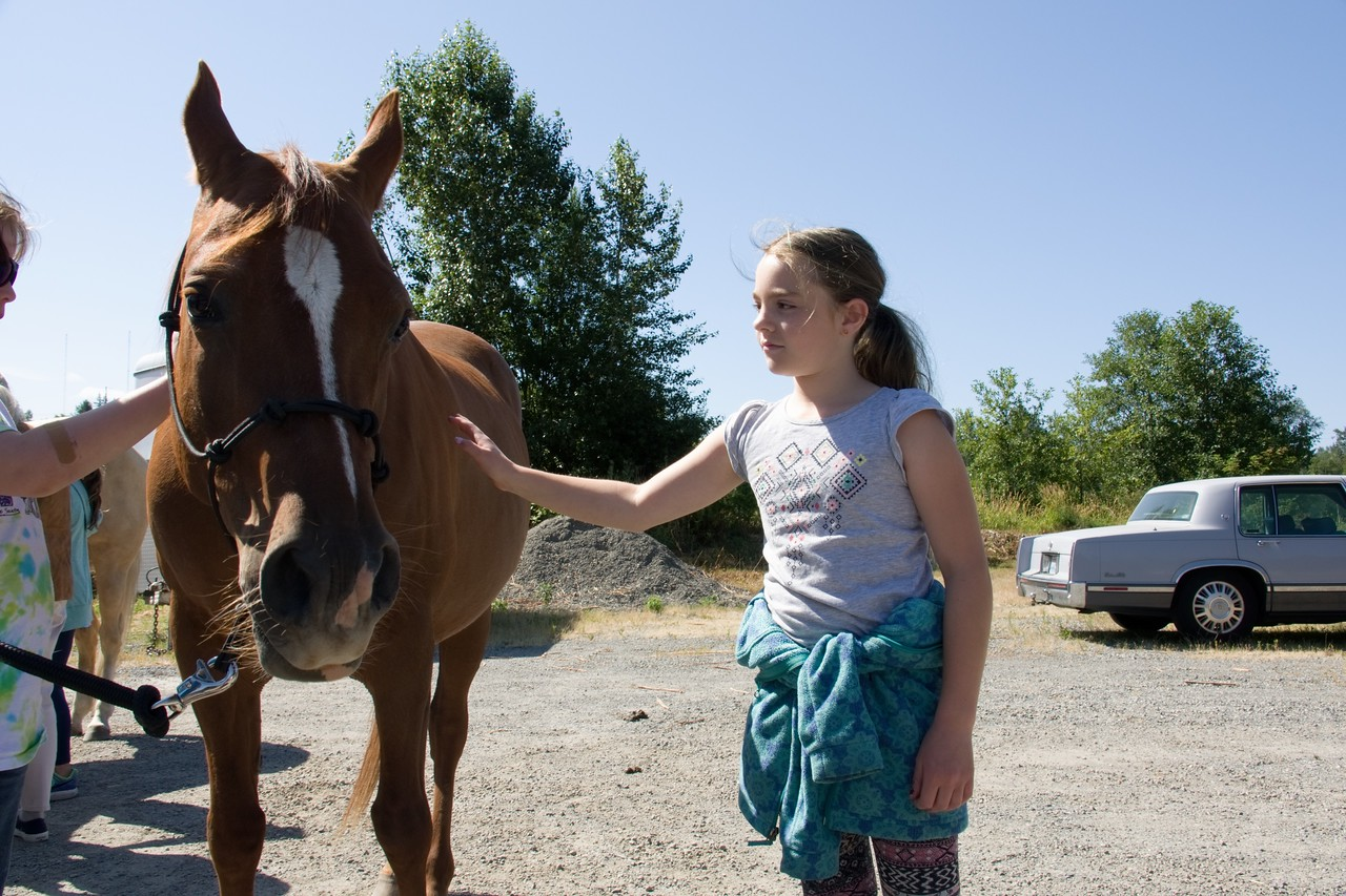 Horses 106