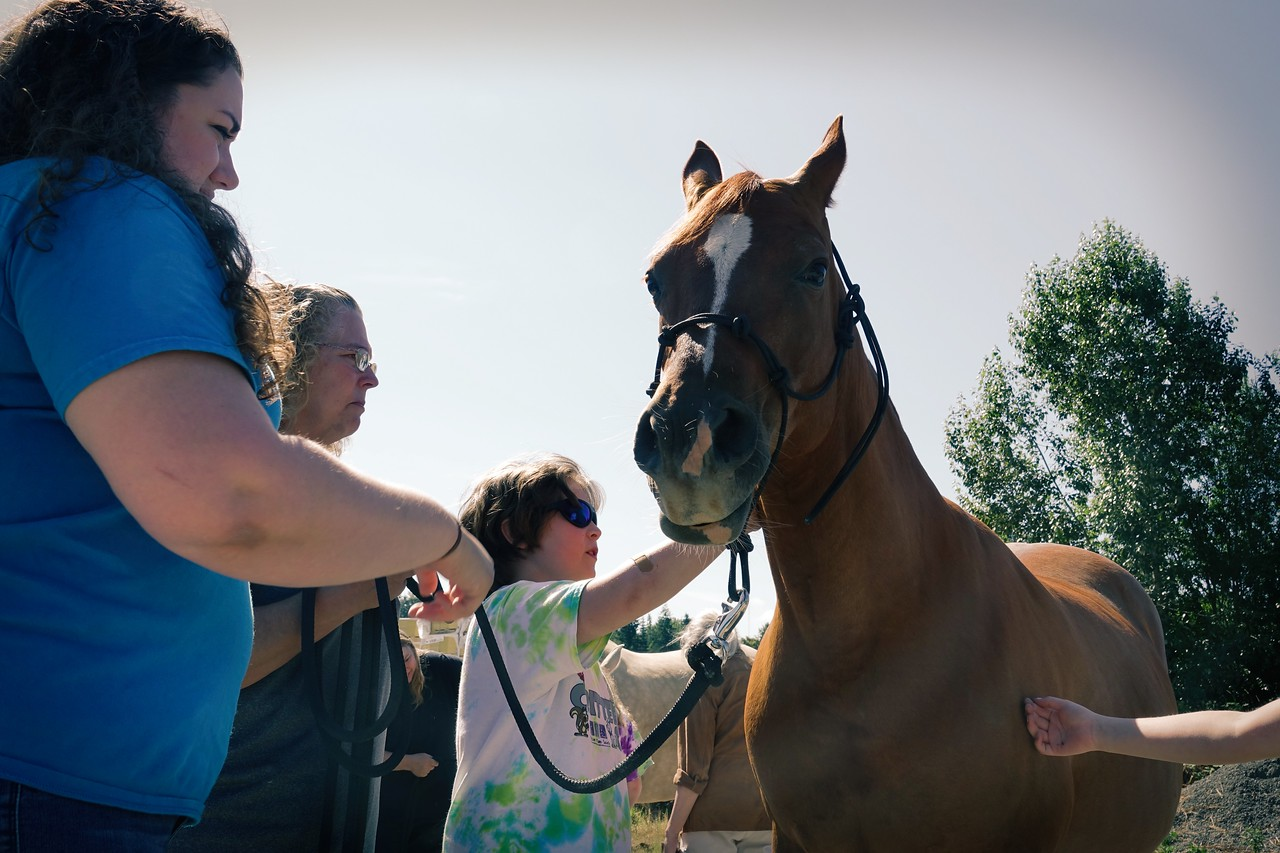 Horses 099 (1)