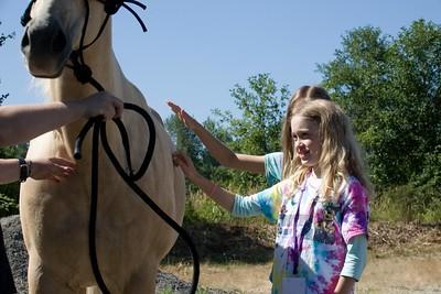 Horses 087