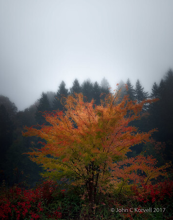 Lake Tree