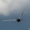 Sailing Through the Air