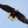 Wide Spread Wings