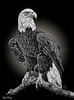 Eagle 5685 w65