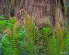 Ferns 9740 w66