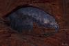 Window to the Stars 6293 w64