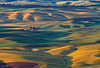Palouse Morning Splendor 9910 w66