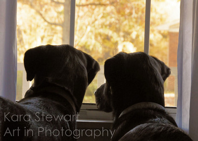 November 14, 2011  Two Waiting  Lucy and Luke waiting.