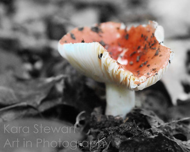 November 18, 2011  Red Mushroom  This is one from the archives that I resurrected by playing around with it in Topaz Adjust BW Effects.  Thanks so much for all your comments this week!