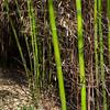 bamboo-3282