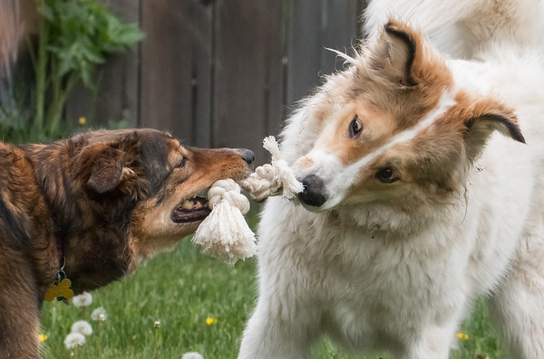 Seriously Dude - my rope!
