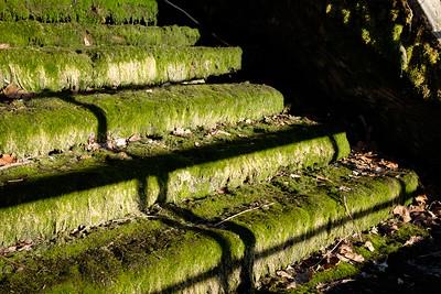 mossy_steps-2864