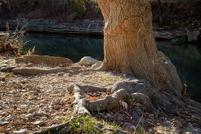 tree+spring-2850