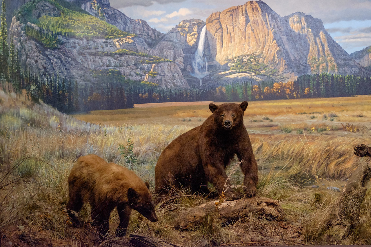 wow_bear_diorama-2994