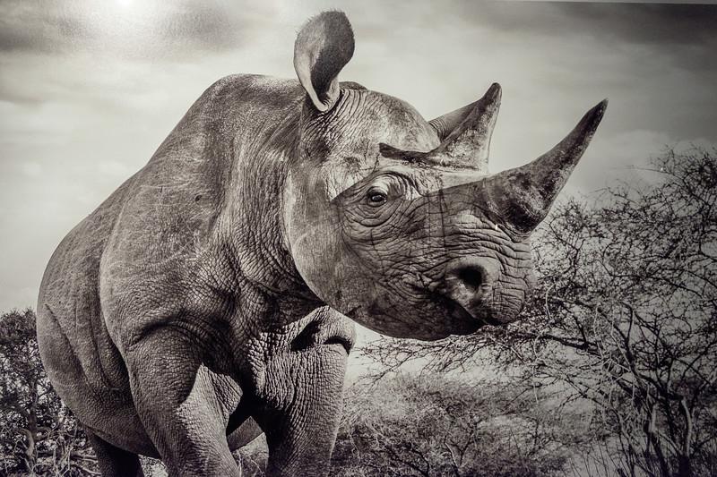 wow_rhino_d-yarrow-3028