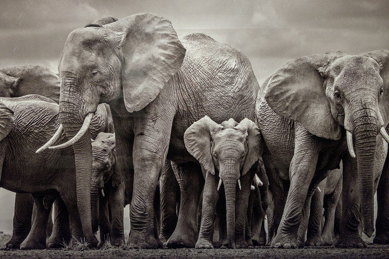 wow_elephants-d-yarrow-3027