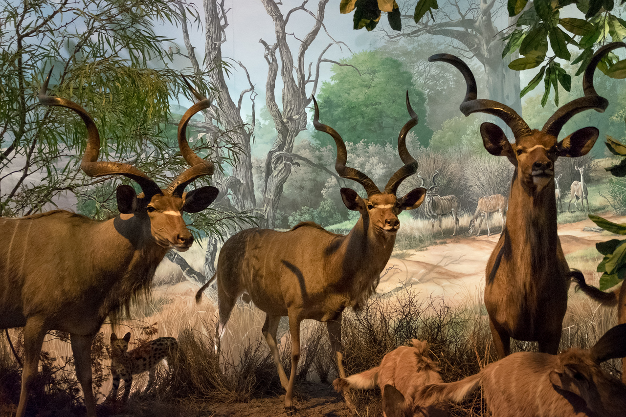 wow_african_ungulates-3024