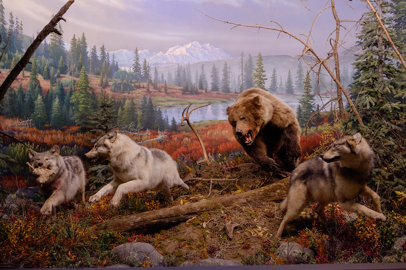 wow_bear+wolves-2997