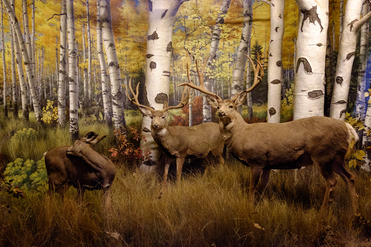 wow_deer_diorama-2996