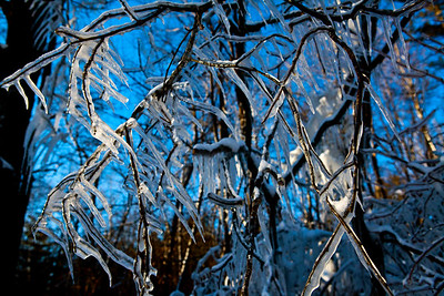 Ice in the Trees_9762