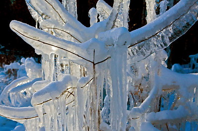 Frozen Branches_9742
