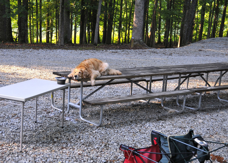 "June 25, 2012<br /> <br /> Samson says, ""I love camping!""  Except not so much for the gravel. Tough on the paws, apparently. This was our last day at the campsite and I had him get up on the table to brush him, and then he just stayed there in lieu of navigating the gravel to the camper again."