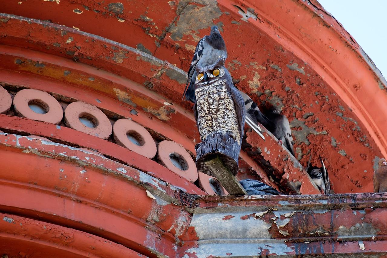 owl_n_pigeon-0645
