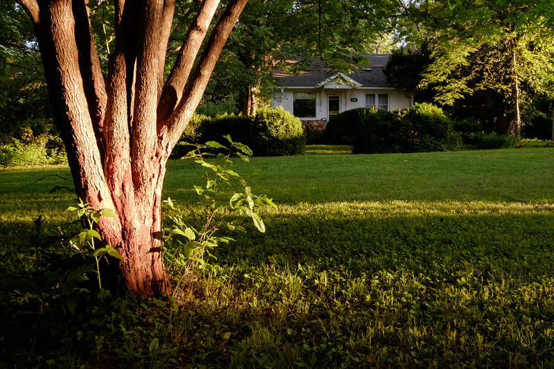 View of the house from the front yard; low sunlight on redbud trunk.