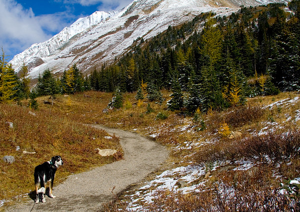 Late September at Highwood Pass