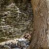 stone+tree-3234