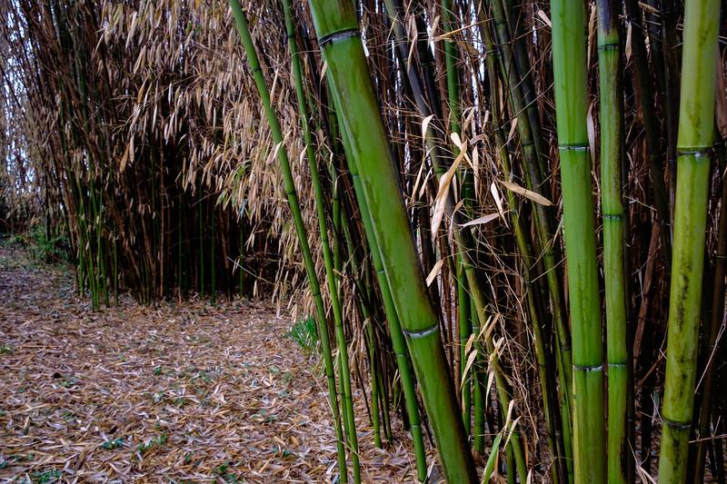 bamboo-3281