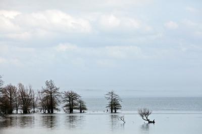 Bald Cypress Trees Toledo Bend Reservoir Texas_1000