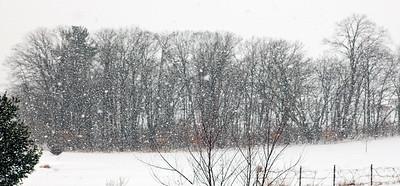 Backyard Snow_9810