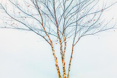 Tree Detail_9878