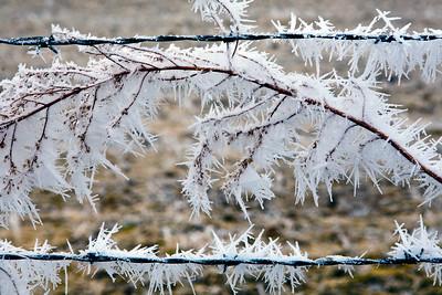 Fog Ice_9128