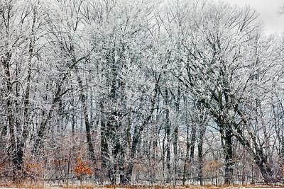 Hoar Frost Trees_0035