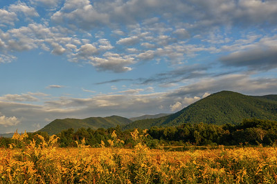 Goldenrod and Thunderhead Mountain