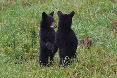 Hazel Cubs-Summer 2021