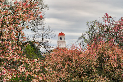 "Spring ""time"" at Blount County Courthouse"